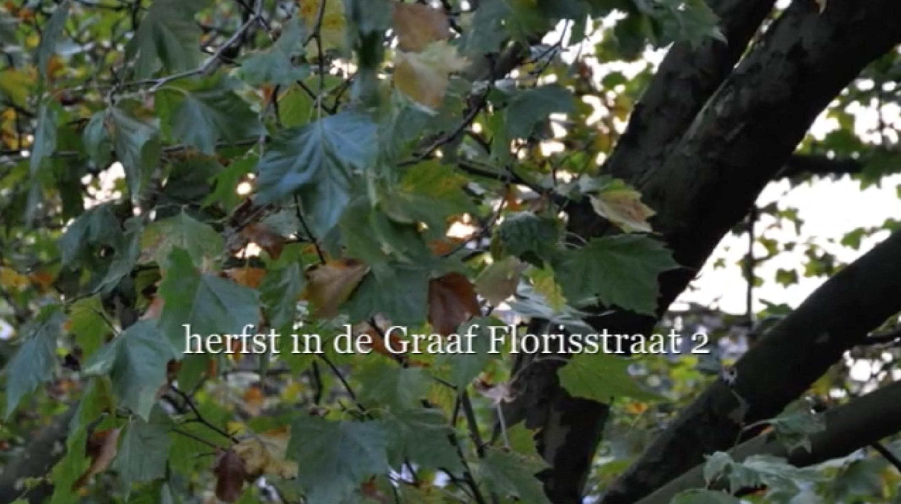 Herfst in de Graaf Florisstraat