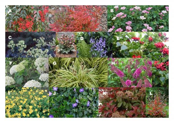 De bloemetjes en planten buiten zetten!
