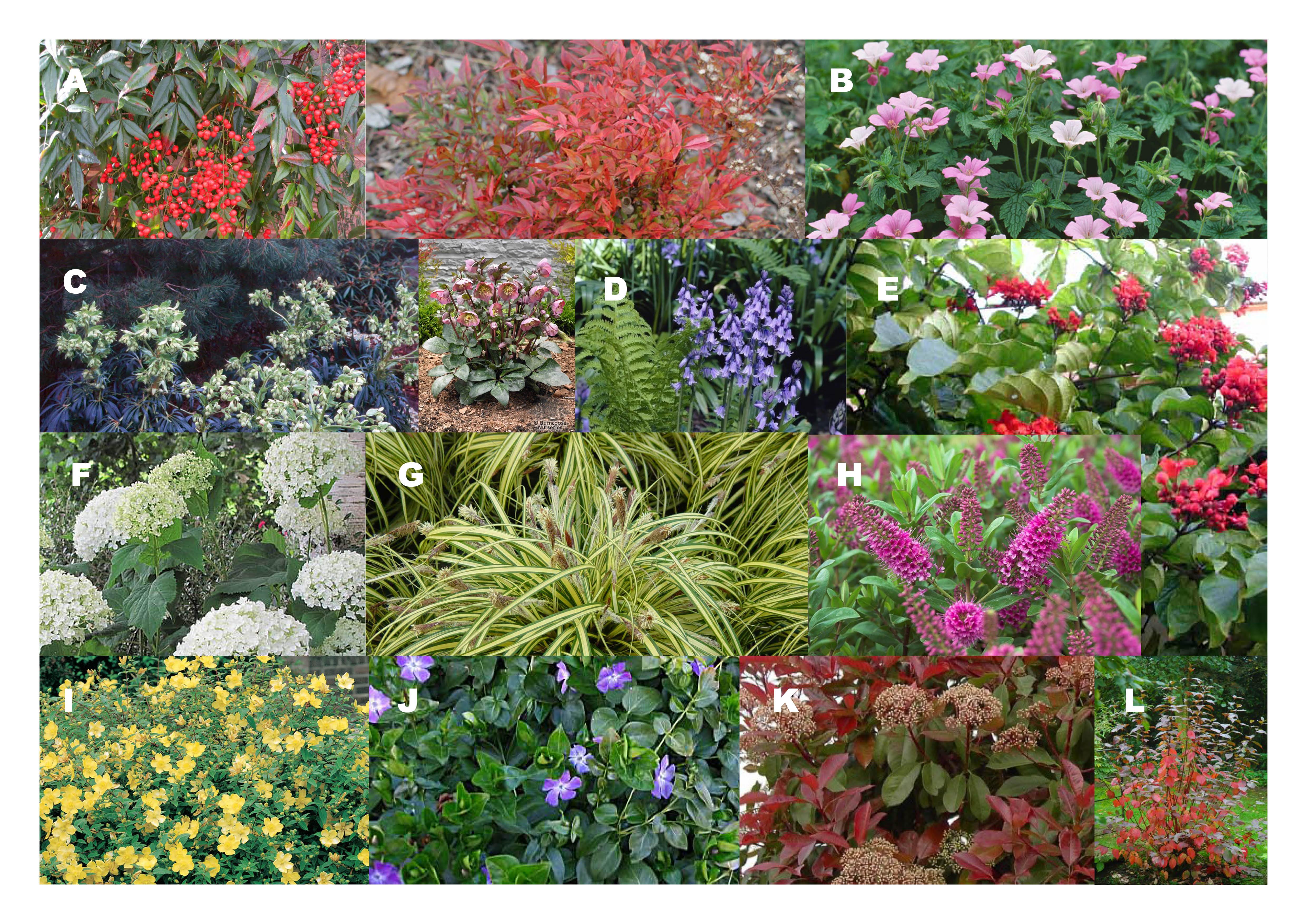 De bloemetjes en planten buiten zetten graaf florisstraat de eerste website met een eigen - Buiten zenplanten ...