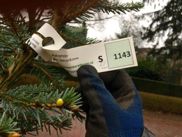 Luuk's kersttip - Een Kerstboom