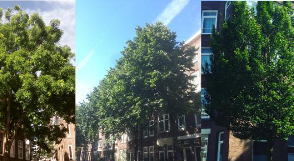 Bomenwandeling door de wijk